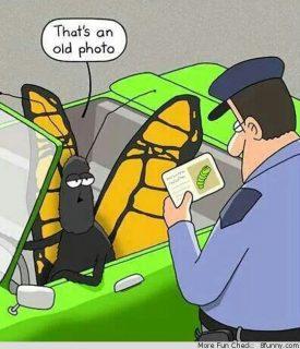 mariposa manejando con licencia de gusano (caricatura)