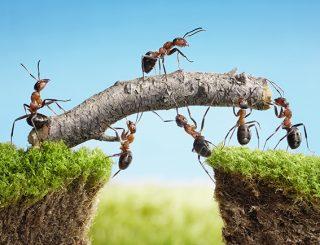 Humildad hormigas